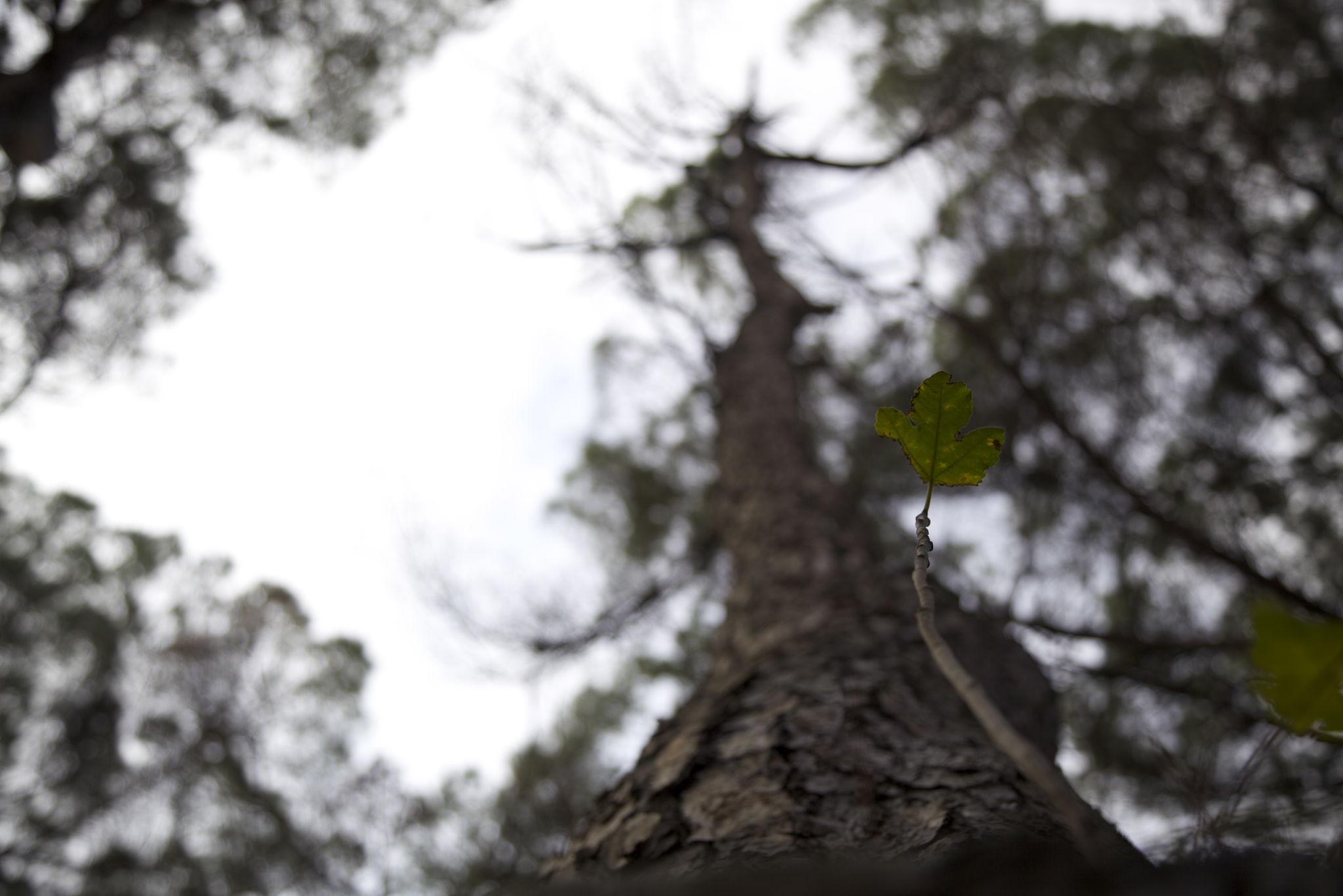 Immagini Di Piante E Alberi potatura alberi alto fusto | leader-servicesrl